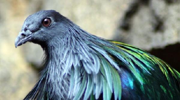 col bird