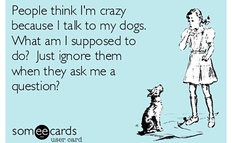 dog-crazy-talk-feature-2