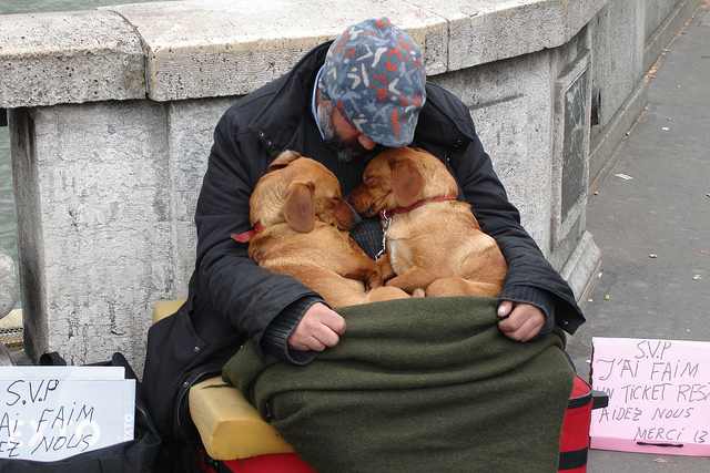 homeless-dogs