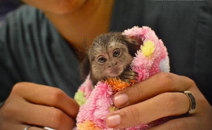baby monkey saved