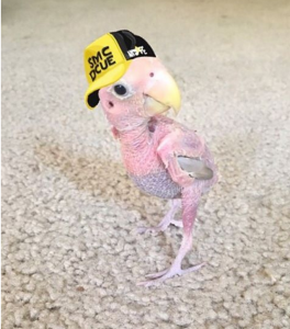 Tiny Naked Bird Wears Sweater Made Out of a Sock to Keep
