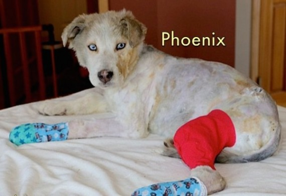 phoenix8-570x391