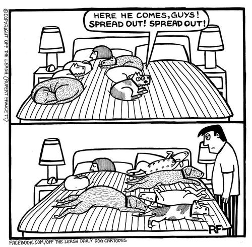 spread-out-dogs-bed