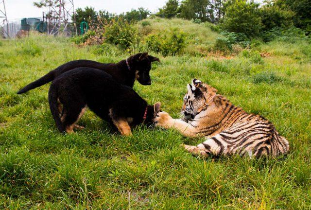 suria-and-pups