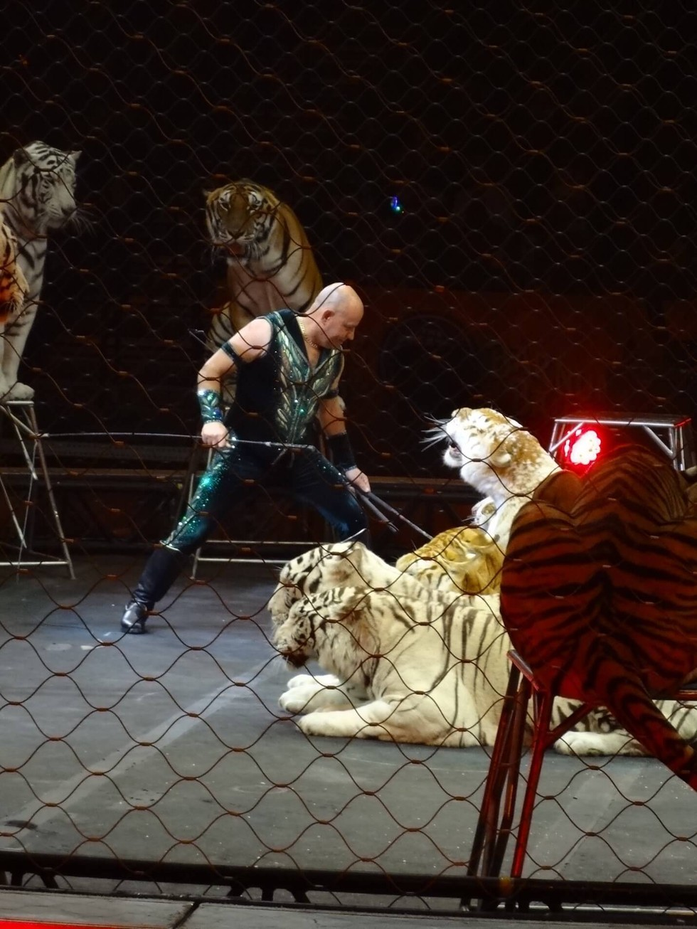 ringling brothers tigers