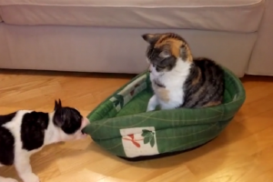 dog-cat-bed