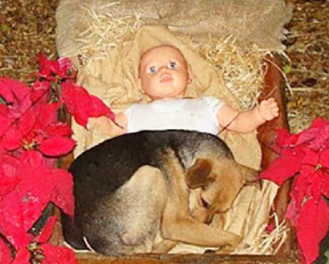 Dog found in manger