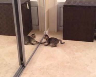kitten vs mirror