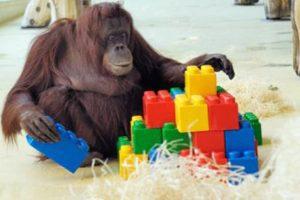 orangutan lego