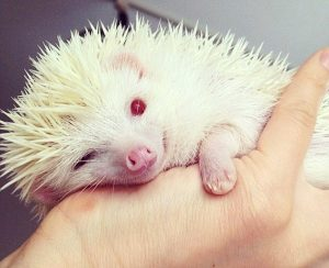 16 Animals You Rarely See In Albino Form
