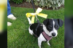 dogs yellow ribbon