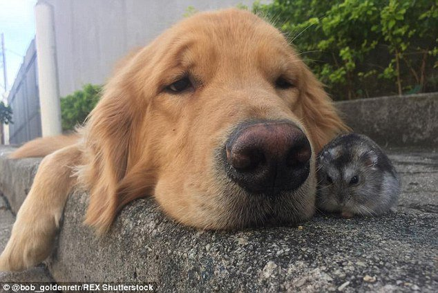 The World's Friendliest Dog Loves To Cuddle With 8 Birds ...