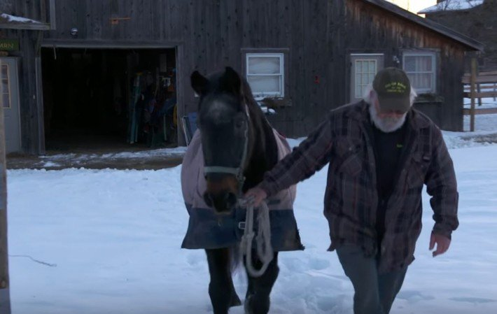 40-Year-Old Horse Saves Man's Life