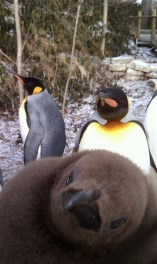 Photos Of Animals Who Have Taken Photobombing To An Expert