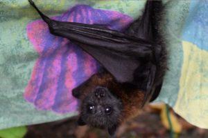 baby bat chirping