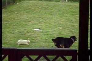 dog rabbit friendship