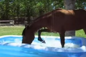 horse kiddie pool