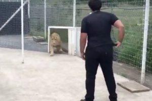 human lion reunion