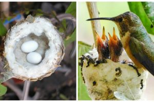 hummingbird eggs