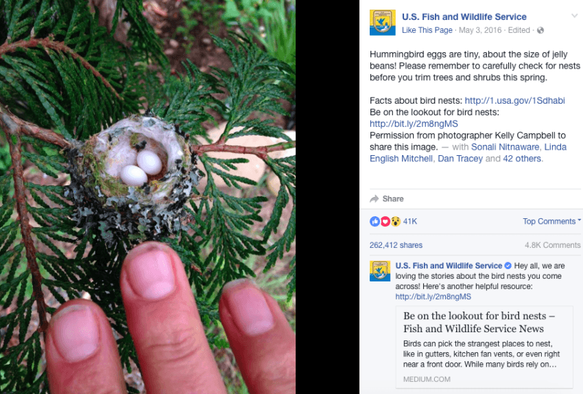 ¿Cómo Hummingbirds Mate? | Sciencing