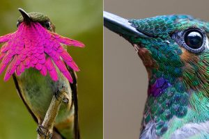 hummingbird photography