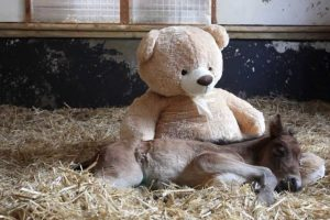 pony and teddy bear