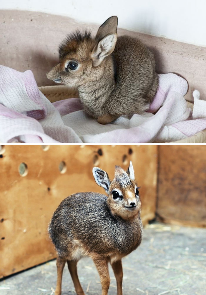 Photos Of Extremely Rare Yet Adorable Animal Babies