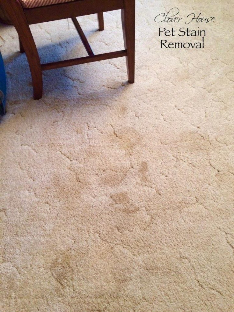 remove pet stains from carpet for good by making this simple solution yourself. Black Bedroom Furniture Sets. Home Design Ideas