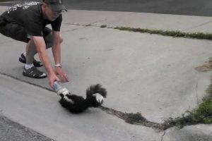 skunk rescue
