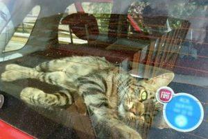street cat rescue