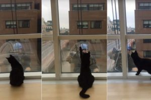 Cat and window cleaner