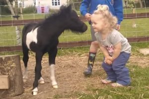 foal meets toddler