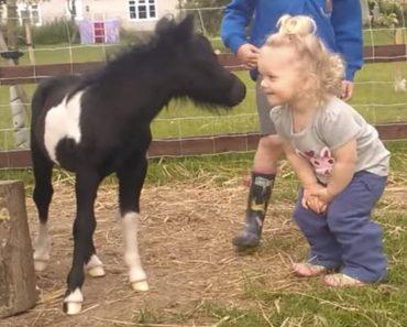 foal meets toddler