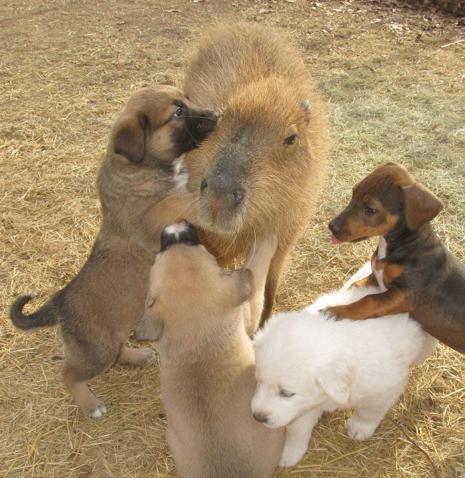 Baby Friendly Big Dogs