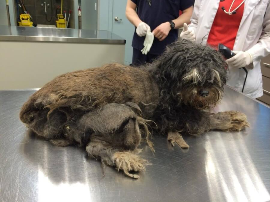 matted dog fur