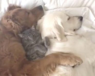 puppies taking a nap