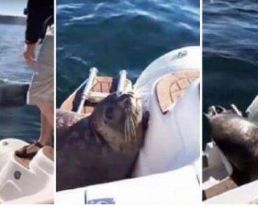 seal vs killer whales