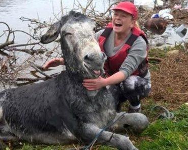 smiling rescue donkey
