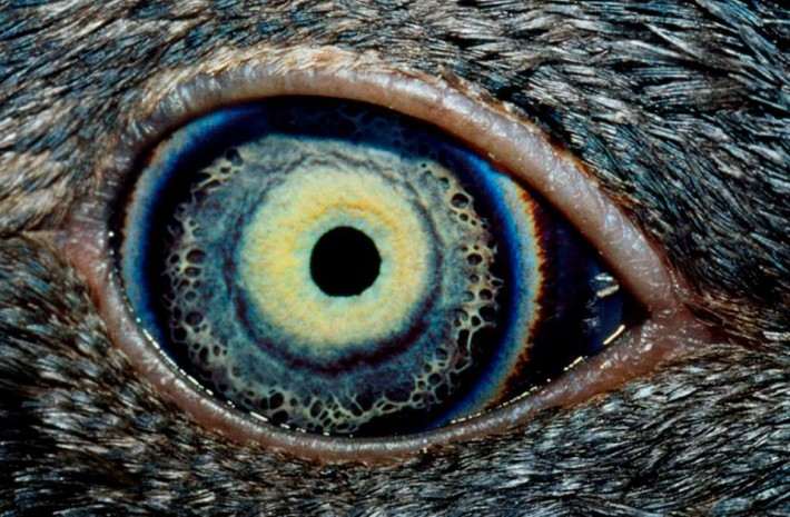animals eyes