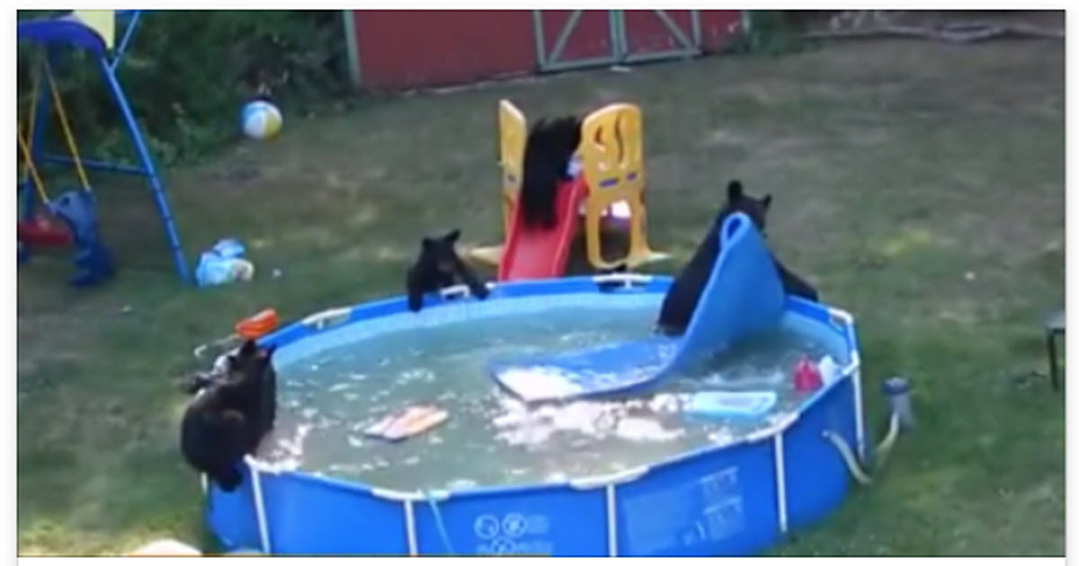 This Family Has Some Unexpected Guests Playing In Their Pool