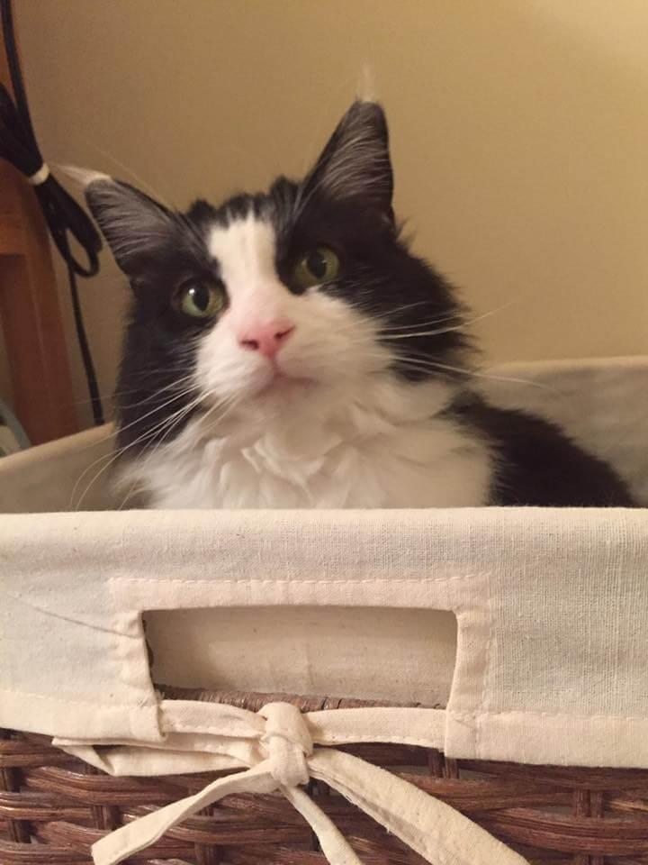 cat neutering voucher scotland