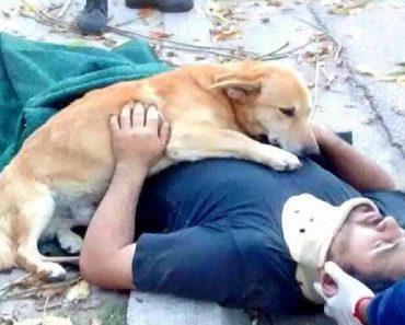 devoted rescue dog