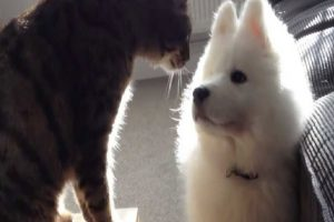 dog cat friendship