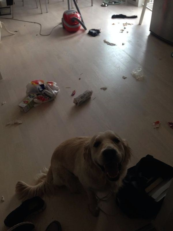 Pets Who Have Idea Made These Messes