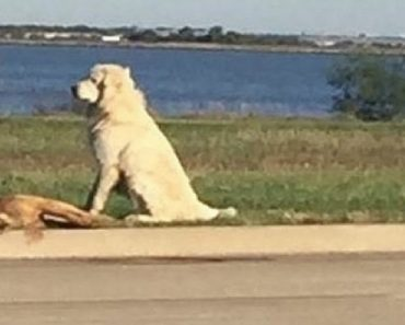dog standing guard