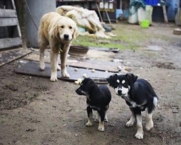 dogs reunited after rescue