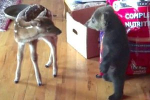 fawn and bear relationship