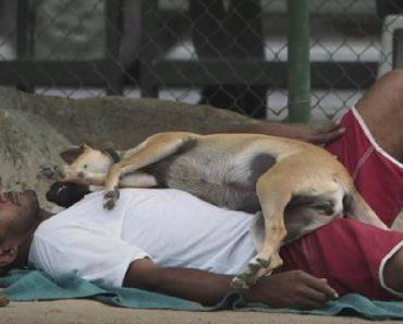 innovative pet shelter