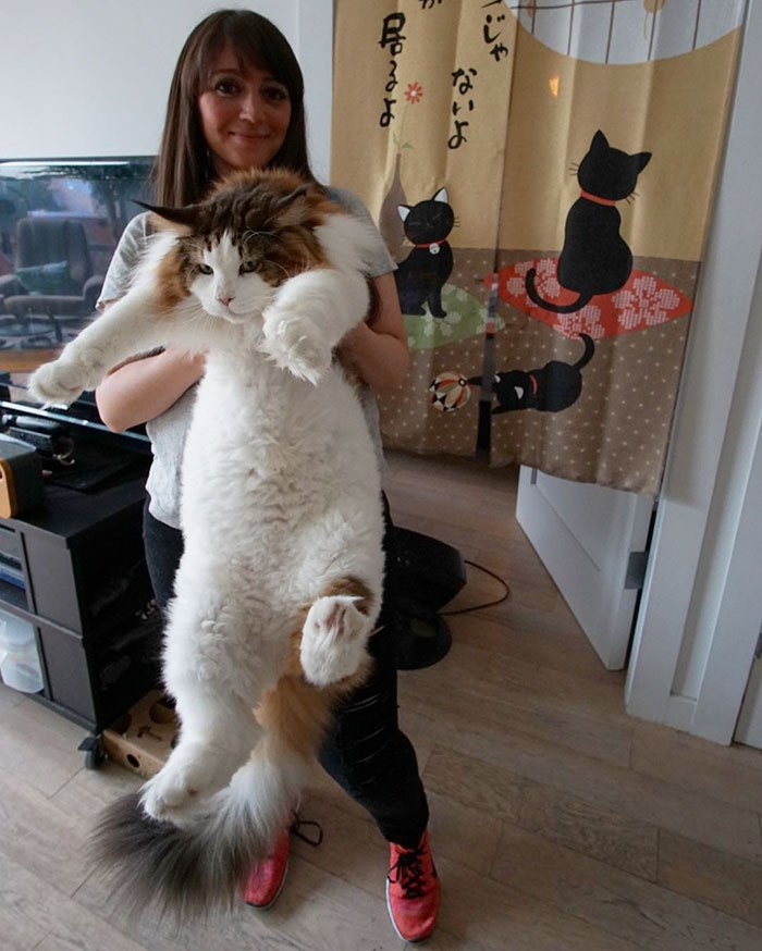 largest cat ny
