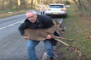 rescued doe